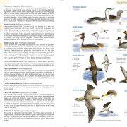 doublo-oiseaux