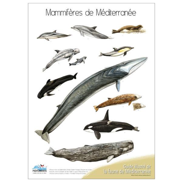 mamiferes