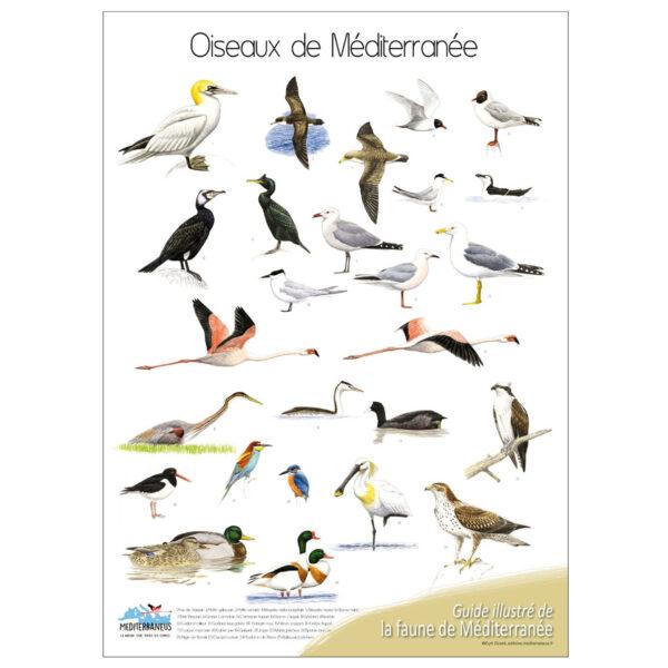 poster oiseaux editions mediterraneus. Black Bedroom Furniture Sets. Home Design Ideas