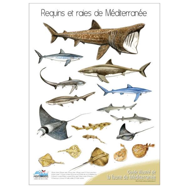 requins-et-raies