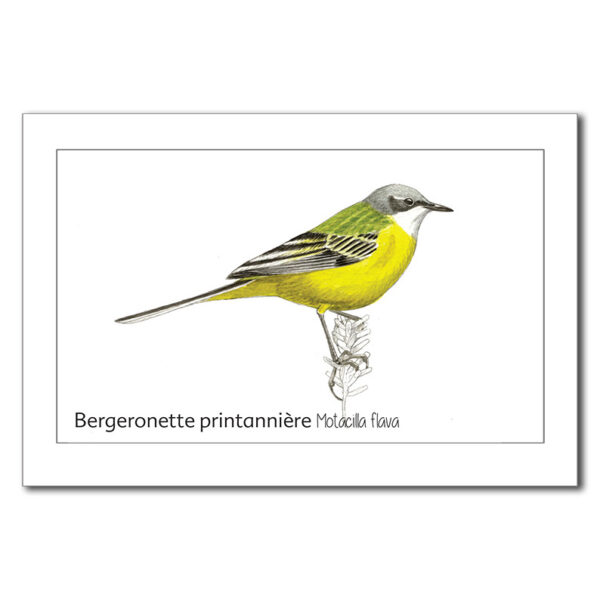 bergeronette-1-3