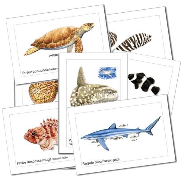 cartes postales mer