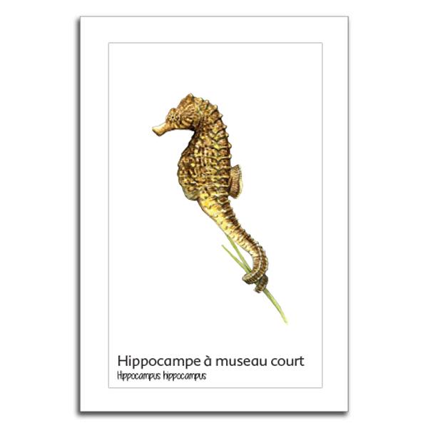 hipoocampe copy
