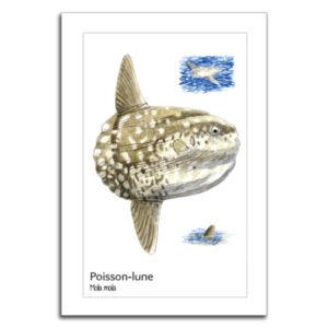 poisson lune copy