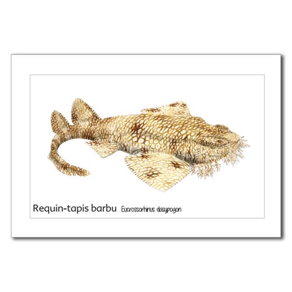 requin tapis copy