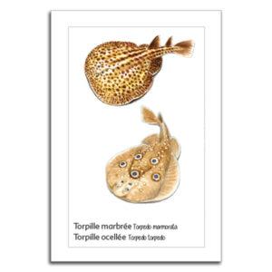 toprilles copy