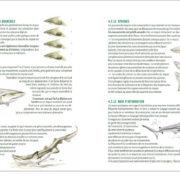 Requins-P3