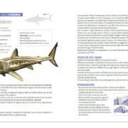 Requins-P5