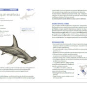 Requins-P6