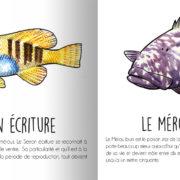 animaux_mediterranee_page7